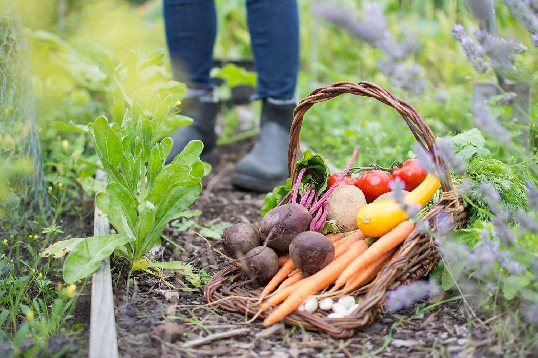 Autumn Garden 10 Vegetables To Plant Now Ibiza Property Guide